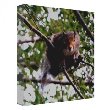 """Peek-A-Boo"" Gallery Wrapped Canvas Print"