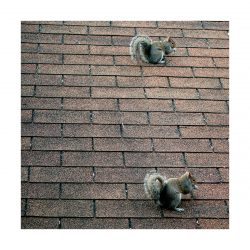"""Two Squirrels Eat As One"" - Stretched and mounted canvas photo print"
