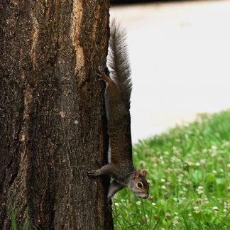 fairview avenue squirrel